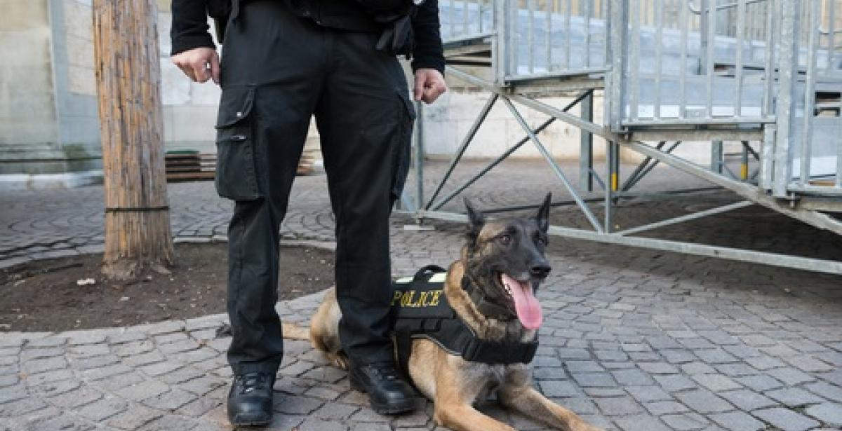 The Role of Canines and Canine Units in the Canadian Police Service Blog Header
